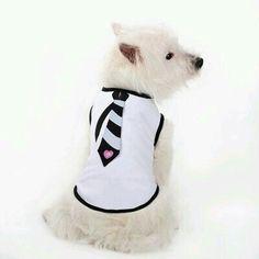 Necktie Dog Tank Top by Dogo - Black Shiloh Dog, Black Puppy, Dog Clothes Patterns, Designer Dog Clothes, Dog Boutique, Medium Sized Dogs, Pet Fashion, Boy Dog, Puppy Clothes