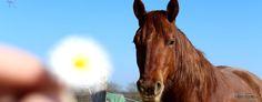 Unterschreibst du den Friedensvertrag mit deinem Pferd? Was du aus der Geschichte lernen kannst
