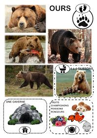 Nature Activities, Summer Activities For Kids, Autumn Activities, Sensory Activities, Bear Crafts, Montessori Materials, Preschool Worksheets, Forest Animals, Brown Bear