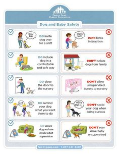 How to safely introduce your dog to your new baby