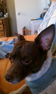 Boston - My boyfriend (now husband) and I moved into an apartment together and one of the perks was we could have pets and I knew I wanted a rescue. ...