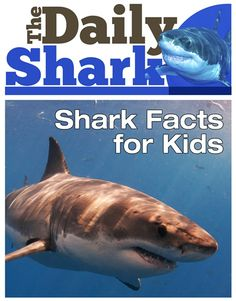 Shark Facts for Kids. - Fun Facts for Kids Shark Facts For Kids, Fun Facts About Sharks, All About Sharks, Sharks For Kids, Scary Ocean, Shark Books, Fiction Books For Kids, Shark Activities, Shark Week