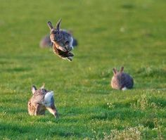 I LOVE seeing bunny hops. They're so happy :)