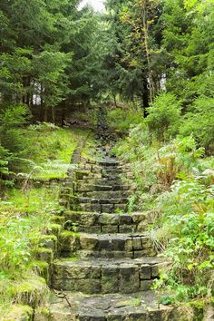Stone stairs in the forest stock image. Image of exploration - 60134103
