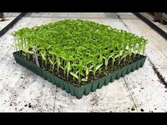 How to Pick the Best Organic Seeds & Avoid GMO Seed Varieties Buy Greenhouse, Greenhouse Supplies, Seed Germination, Organic Seeds, Growing Flowers, Horticulture, Herbs, Plants, Outdoor