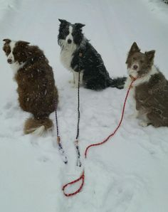A walk in the snow today!