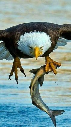 Famous Types of Eagles in The World With Awesome Pictures Eagle Images, Eagle Pictures, Nature Animals, Animals And Pets, Cute Animals, Artic Animals, Woodland Animals, Exotic Birds, Colorful Birds