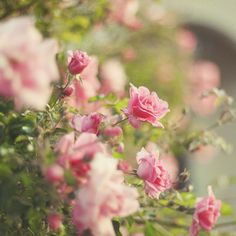 MATIN LUMINEUX: J'aime les fleurs