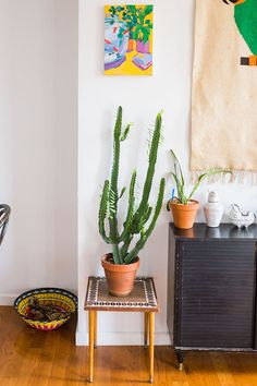 A cactus in the happy Brooklyn home of an artist