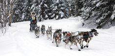 Superior Effort by J Arthur Anderson on Capture Minnesota // John Beargrease sled dog team.