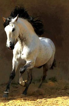 I love a white horse with a black mane, tail and points.