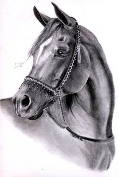 Arabian horse sketch horse head sketch wonderfully horse by on of horse head sketch fabulous arabian horse pencil drawings Horse Drawings, Animal Drawings, Art Drawings, Horse Head Drawing, Horse Sketch, Horse Artwork, Amazing Drawings, Equine Art, Western Art