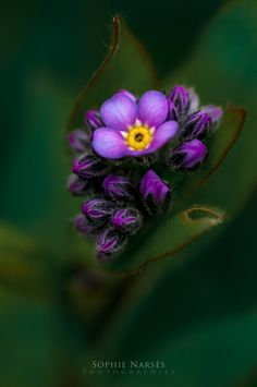Violet Queen by Sophie Narses on 500px