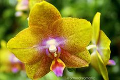nice orchid, Charmaine Zoe