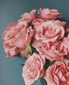 Color Scheme: Pink flowers, green leaves, and blue/gray background Absolutely love the contrast of the pink and blue/gray backgroud My Flower, Beautiful Flowers, Pink Roses, Pink Flowers, Parfum Rose, L Eucalyptus, No Rain, Peonies, Planting Flowers