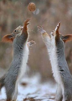 best Squirrels images