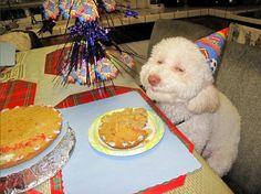 perrito con gorro de cumpleaños