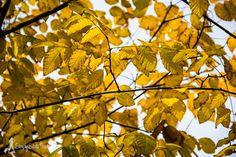 Bright autumnal leaves at Jardin des Plantes, #Paris