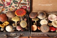 Mushrooms Mlle Loulou