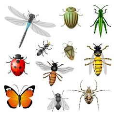 Royalty free clipart illustration of colorful insects, on a white background. This royalty-free cartoon styled clip art picture is available as a fine art print and poster. Clipart Colorful Insects - Royalty Free Vector Illustration by vectorace Organic Fertilizer, Organic Gardening Tips, Vegetable Gardening, Organic Pesticides, Insect Clipart, Bees And Wasps, Beneficial Insects, Humming Bird Feeders, Garden Pests