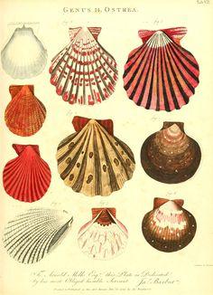 #shells print