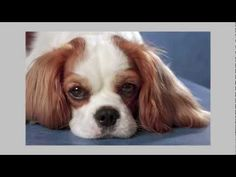 Diamond Pet Foods Salmonella Outbreak and Recall - Food Safety News Consumer Alert