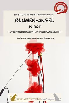 Blumen Angel in rot oder schwarz - Selectcats and Dogs Petshop Pet Shop, Raspberry, Dogs, Leather Cord, Names, Cat, Handmade, Pet Store, Pet Dogs