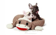 a sock monkey pet bed!