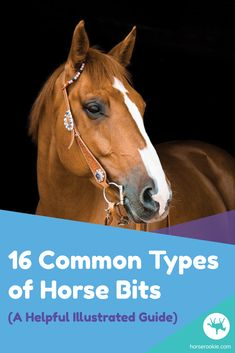 Entire books have been written about bits and finding the best bit for you and your horse. This article serves as a simplified guide to teach you all about the most common bits found in both English and Western disciplines. Bits For Horses, Types Of Horses, Horse Bits, Horse Gear, My Horse, Ranch Riding, Riding Hats, Riding Gear, Walking Horse