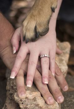 My daughter's engagement picture where her German Shepherd approves!