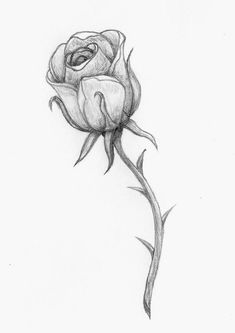 ▷ 1001 + ideas and inspirations for beautiful pictures to paint! - rose with large thorns, cool pictures to trace, black-gray drawing, flower - Cool Art Drawings, Pencil Art Drawings, Art Drawings Sketches, Easy Drawings, Flower Drawings, Horse Drawings, Cool Pictures To Draw, Pictures To Paint, Beautiful Pictures