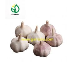 Find 2017 New and Good Quality Chinese White Garlic at Fenduni Foodstuff, no sprout, & best price! Fresh Garlic, Sprouts, Chinese, Chinese Language