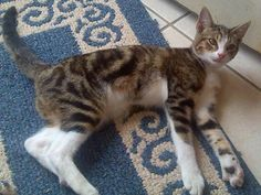 Help needed to find special needs cat STOLEN from his own home in Aberdeen, Washington Aberdeen Washington, Help Needed, Lost Pets, Find Pets, Losing A Pet, Lost & Found, Animal Rights, Special Needs, Own Home