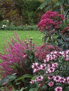 Komposition med färgmatchning och höjd. Fackelblomster (Lythrum salicaria 'Robert'), temynta (Monarda 'Beauty of Cobham'), rosenflockel (Eutrochium purpureum och olika solhattar (Echinacea).