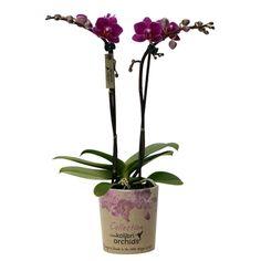 Little kolibri orchid 2tak brasil Accounting, Business Accounting