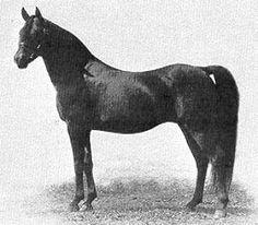 Rustem, 1908