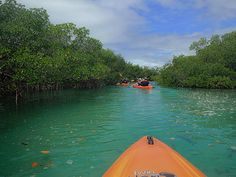 Kayak Tour of Mangroves, Lucayan National Park, Grand Bahama Island.