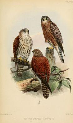 v. 5 (1863) - Ibis. - Biodiversity Heritage Library