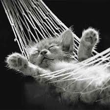 Cat Nap by David McEnery
