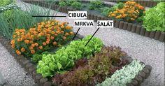 Tieto obľúbené a veľmi nenáročné rastlinky, ktoré sa oplatí mať na záhone. Sú totižto veľmi užitočné nielen pre vaše záhony, ale aj pre vás. Gardening, Boho, Health, Plants, Health Care, Lawn And Garden, Bohemian, Plant, Planets