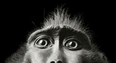 Feature: 'More Than Human' – Personified Animals by Tim Flach | The Tabula