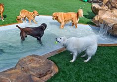 13 Dog Swimming Pool Ideas to Beat the Heat of Summer - meowlogy Dog Playground, Backyard Playground, Backyard Ideas, Pool Ideas, Dog Swimming Pools, Dog Pools, Outdoor Cat Enclosure, Dog Yard, Pet Hotel