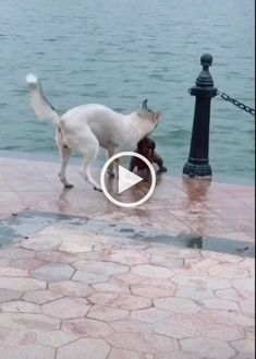 Animals Discover dogs One of the species class. Funny Cats And Dogs Cute Cats And Kittens Funny Animal Videos Cute Funny Animals Animals And Pets Baby Animals Nature Animals Cat Gif Best Dogs Funny Cats And Dogs, Cute Cats And Kittens, Funny Animal Videos, Cute Funny Animals, Funny Laugh, Cat Gif, Baby Animals, Nature Animals, Wildlife Nature