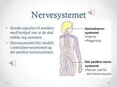 Image result for hvor ligger resten av sentralnervesystemet Rest, Ecards, Memes, Image, E Cards, Meme