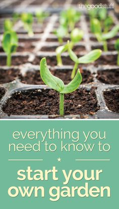 Everything You Need to Know to Start Your Own Garden - thegoodstuff