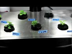 Make Your Own Aerogarden Seed Pods - DIY Seed Pod Kits - YouTube