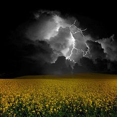lightening & sunflowers...That's so totally wicked!!!!!!!!