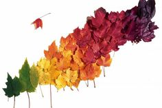 So glad I'm not the only one who has noticed this. Colours of Autumn