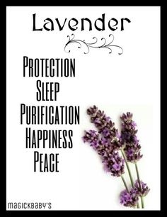 Lavender Magic Herbs, Herbal Magic, Wiccan, Magick, Pagan Witchcraft, Lavender Quotes, Lavender Ideas, Lavender Meaning, Provence Lavender