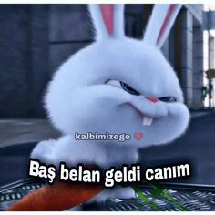 Funny Images, Funny Photos, Love Is Cartoon, Bambi Disney, Neon Words, Memes, Most Beautiful Words, Aesthetic Photography Nature, Kawaii Doodles